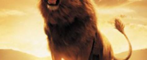 Что общего между знаками зодиака огненной стихии