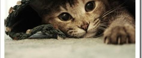 Bosch Sanabelle Urinary для Кошек — выбор моего питомца.