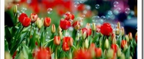 Цветы для разных дам