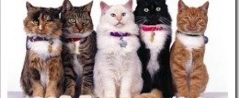 Правильный выбор кошки