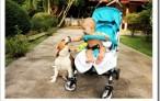 Новорожденный младенец и собака: возможные проблемы и их решение.