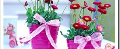 Как выбрать комнатные растения?