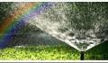 Правильный полив – залог здорового роста растения