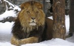 11 причин, почему тебе следует ценить друга-льва