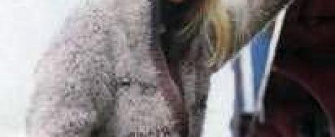 Вязаный бело-коричневый блузка с капюшоном размеры 36/38 и 40/42